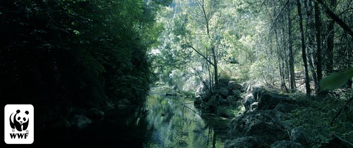Acuerdo de colaboración con  la organización medioambiental WWF